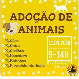 Feira de Adoção de Animais em Salvador
