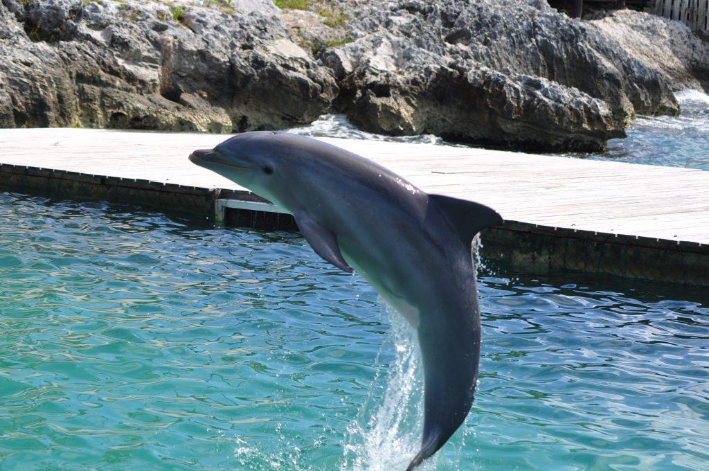 Isla Mujeres - Dolphin Discovery