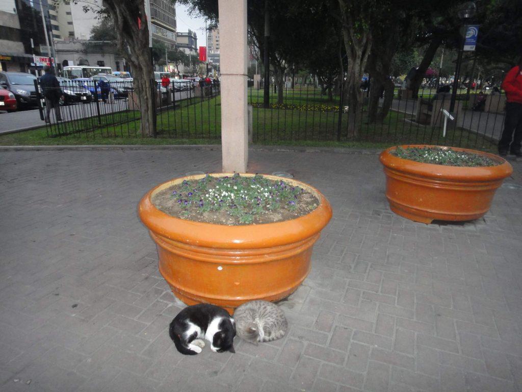 Praça dos Gatos - Lima