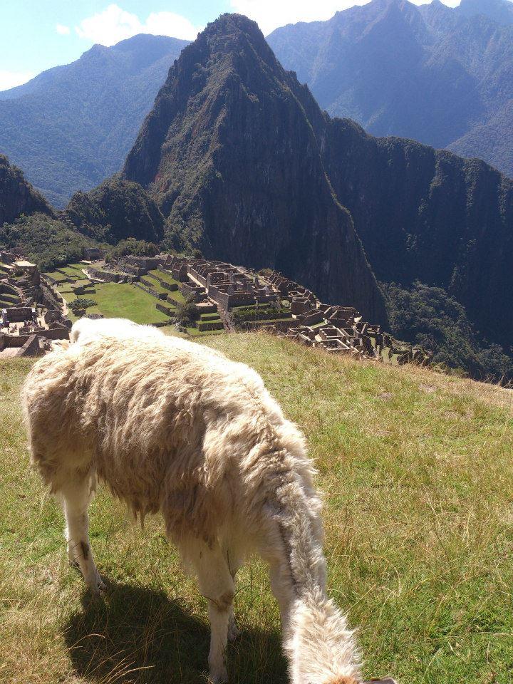 Huayna Picchu: vale a pena subir?
