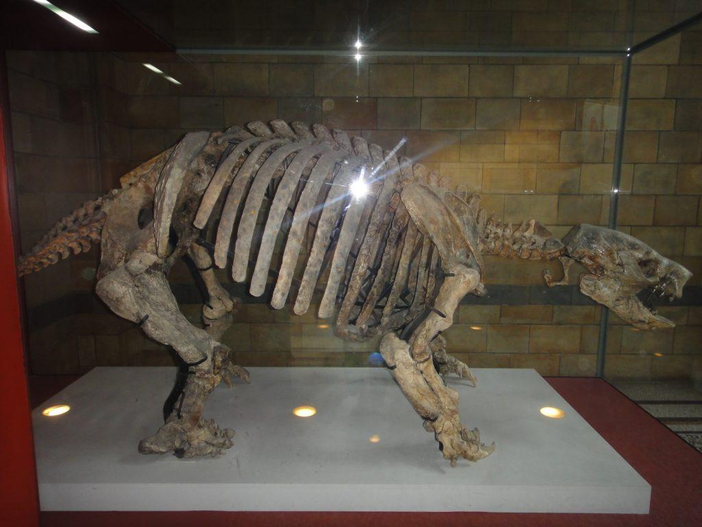 Museus de Londres - Natural History Museum