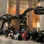 Museu Americano de História Natural: O que encontrar?